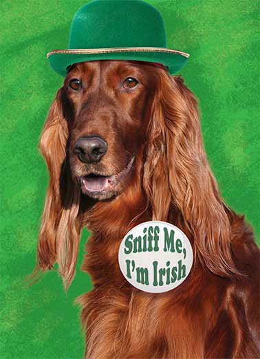 Irish Setter Funny St. Patrick's Day Card